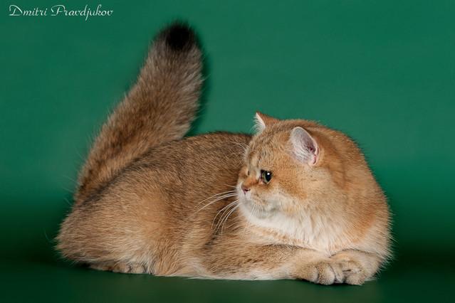 http://foto.e-cats.lv/albums/userpics/11217/normal_444C3300.jpg